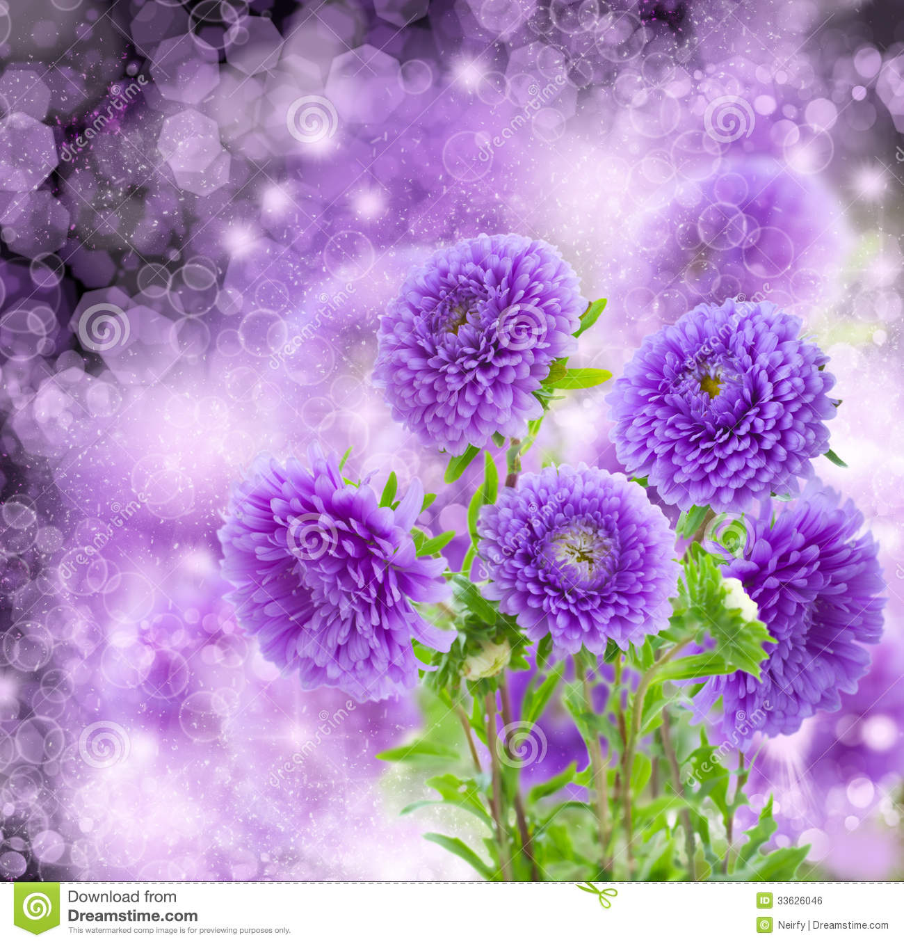Free Desktop Wallpaper Fall Foliage Violet Aster Flowers On Bokeh Background Royalty Free