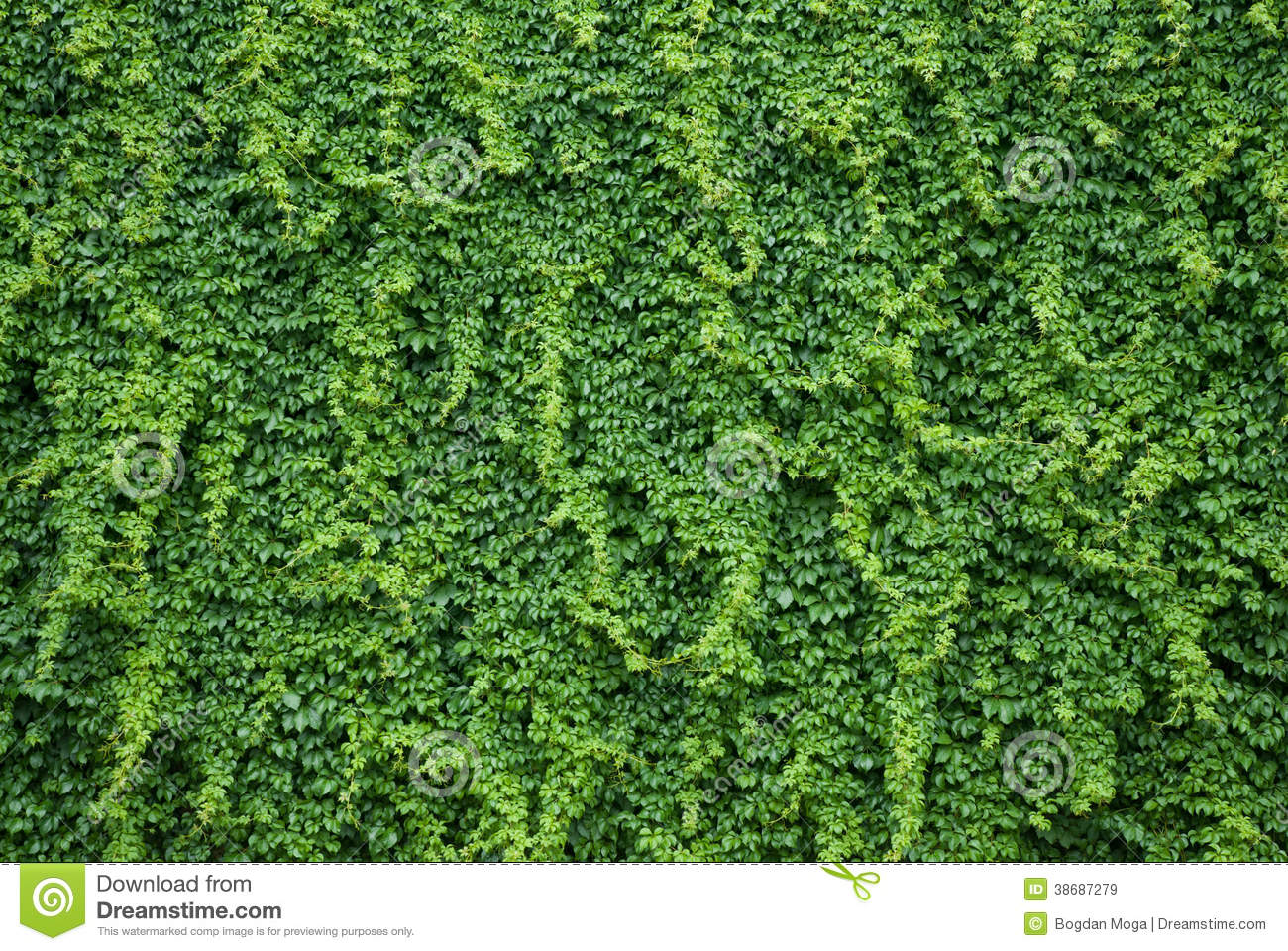 Faux Brick Wallpaper 3d Wall With Green Ivy Leaves Royalty Free Stock Images
