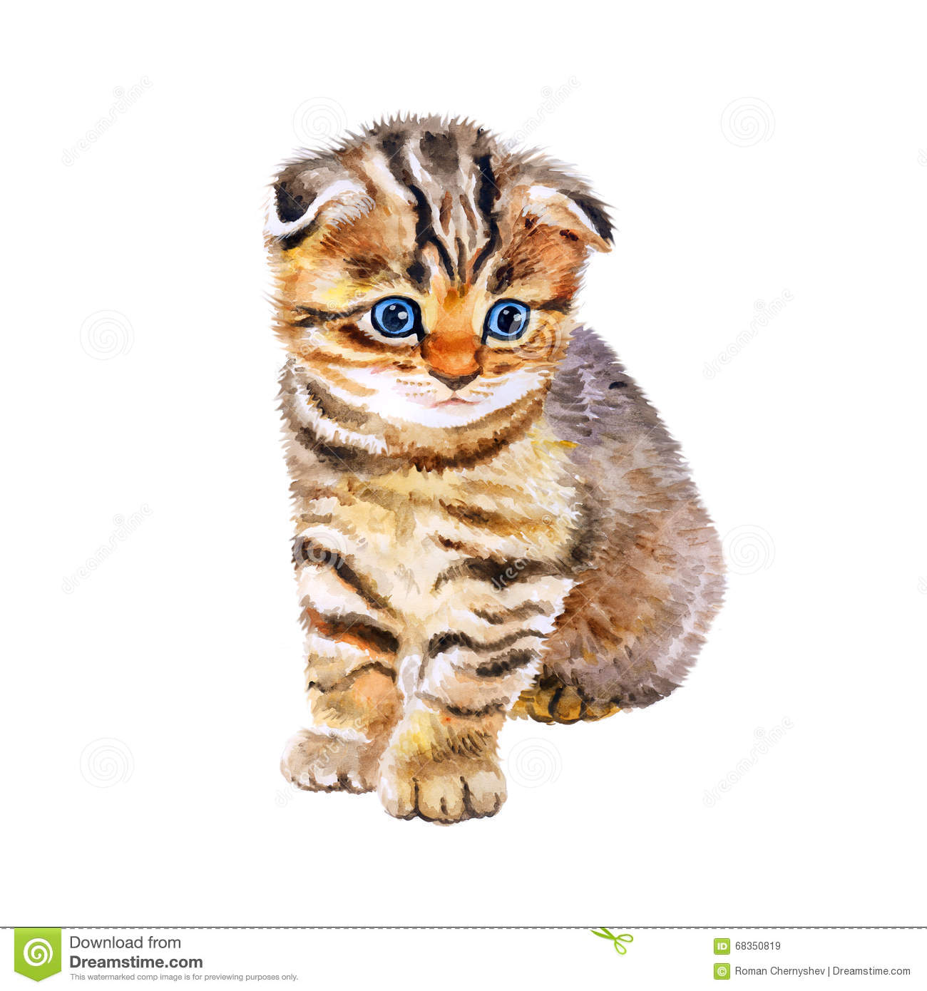 Cute White Kittens With Blue Eyes Wallpaper Watercolor Portrait Of British Scottish Fold Kitten With