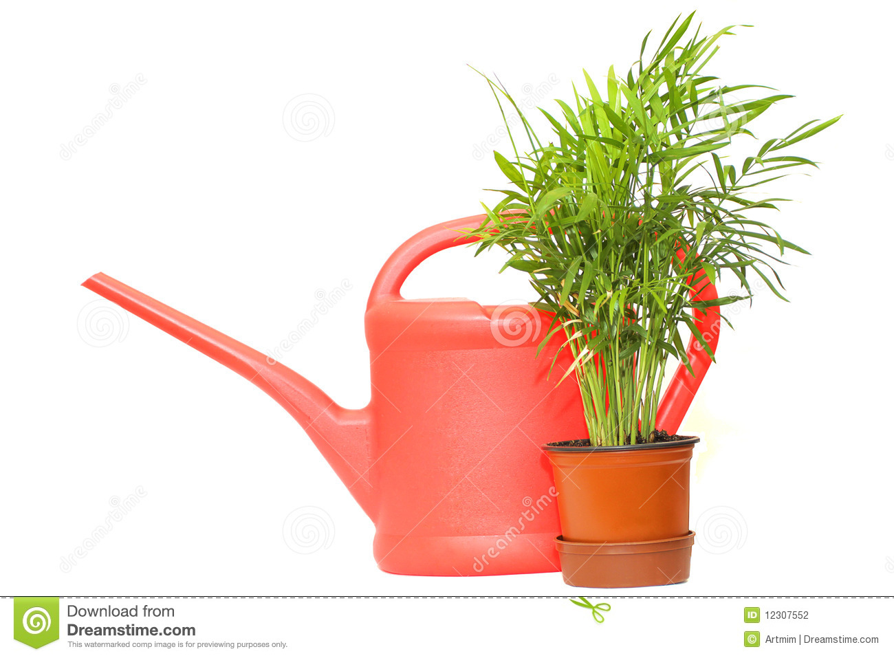 Plant Watering Cans Watering Can And Green Plant Stock Photography Image