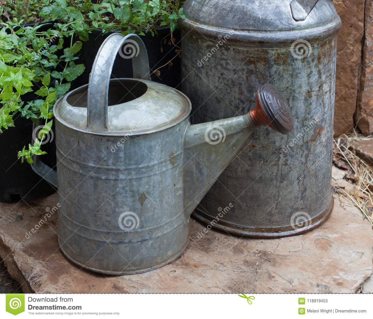 Plant Watering Cans Tin Garden Watering Can Royalty Free Stock Photo
