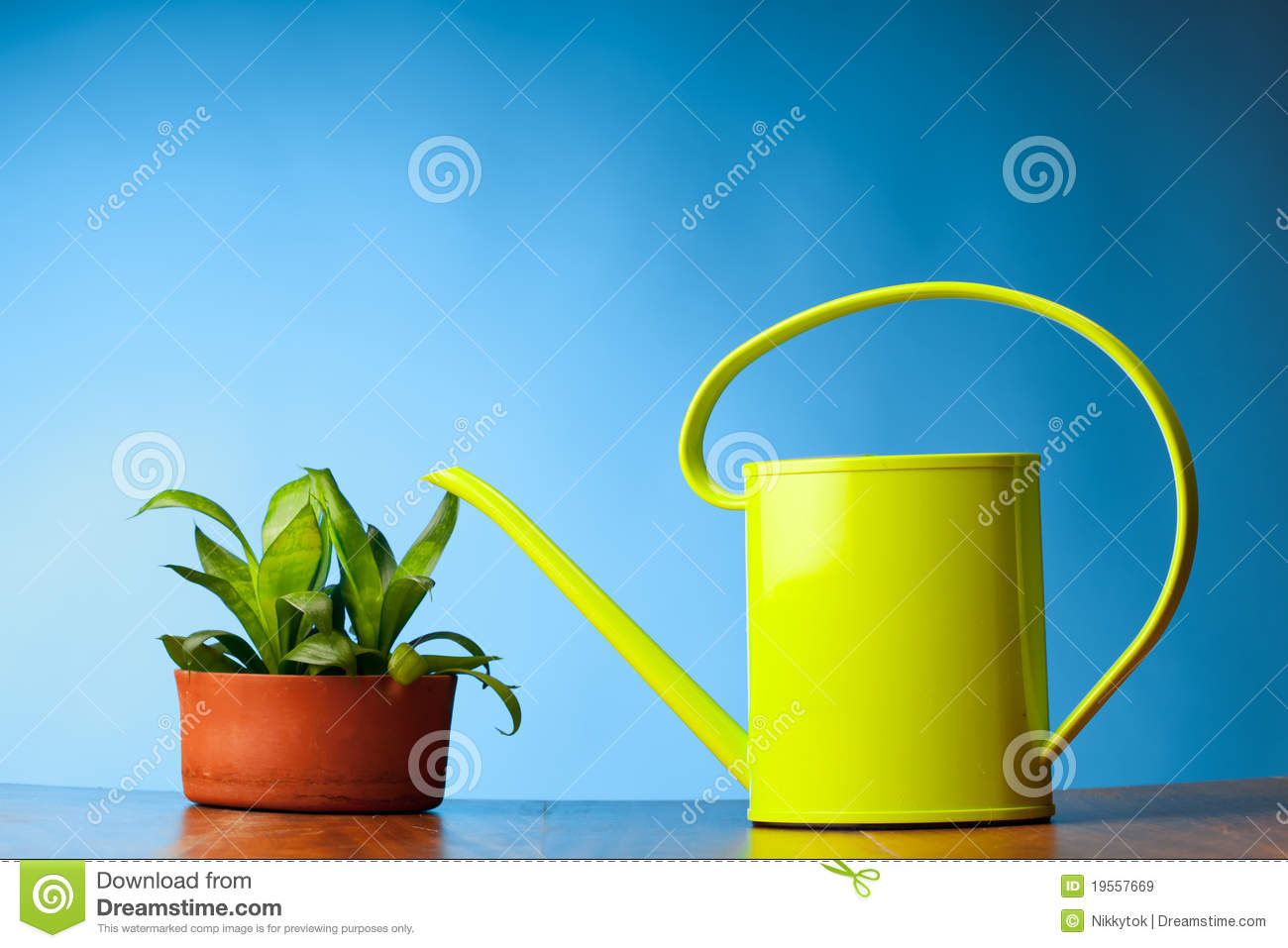 Plant Watering Cans Watering Can And Plant Royalty Free Stock Images Image