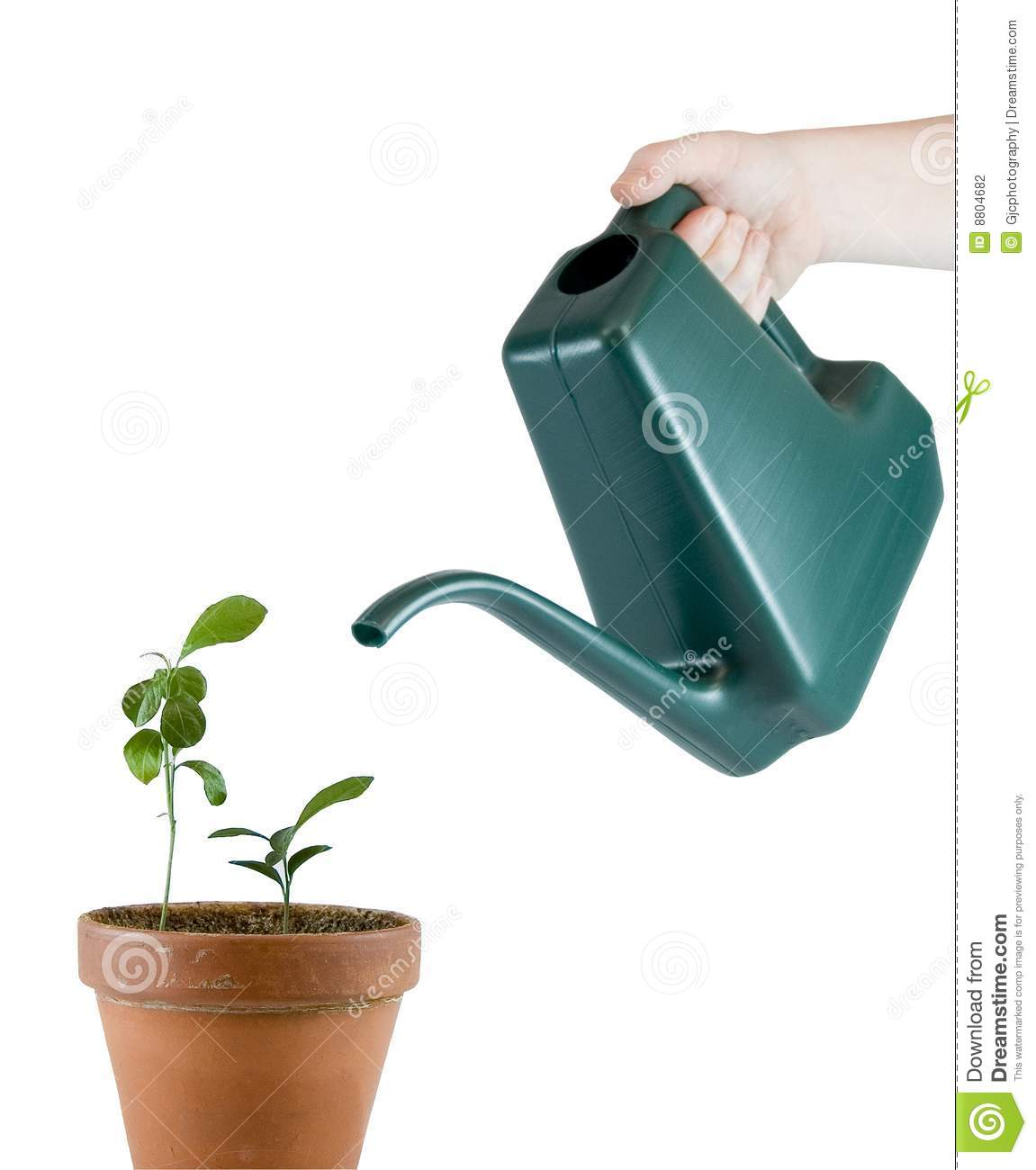 Grote Gieter Watering Can Pouring On Plants Stock Photography Image