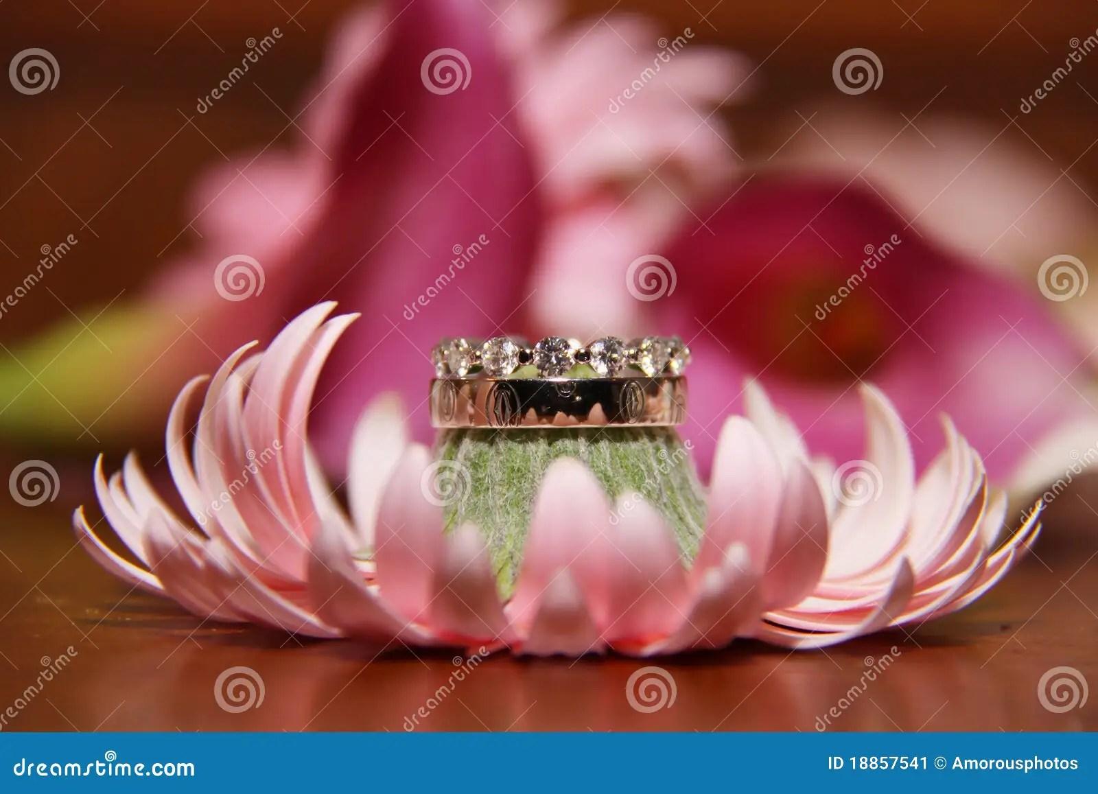 stock image wedding rings pink flower image flower wedding ring Wedding Rings on Pink Flower