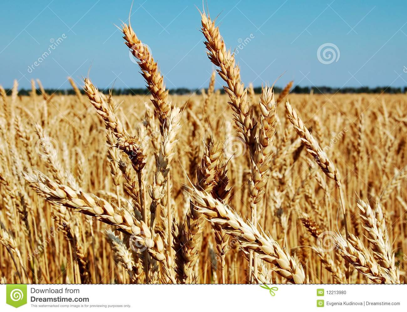 Bolti Farmhouse Wheat Is Bread Bread Is Life Stock Photo Image 12213980
