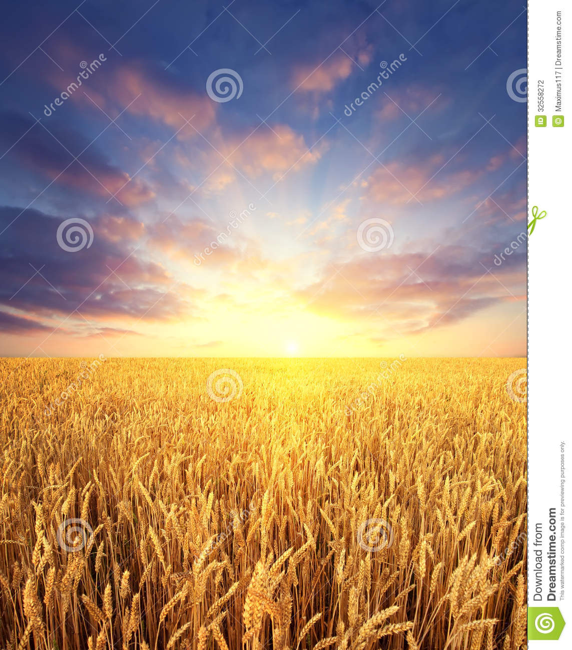 Free Wallpapers Fall Season Wheat Field And Sunrise Sky As Background Stock