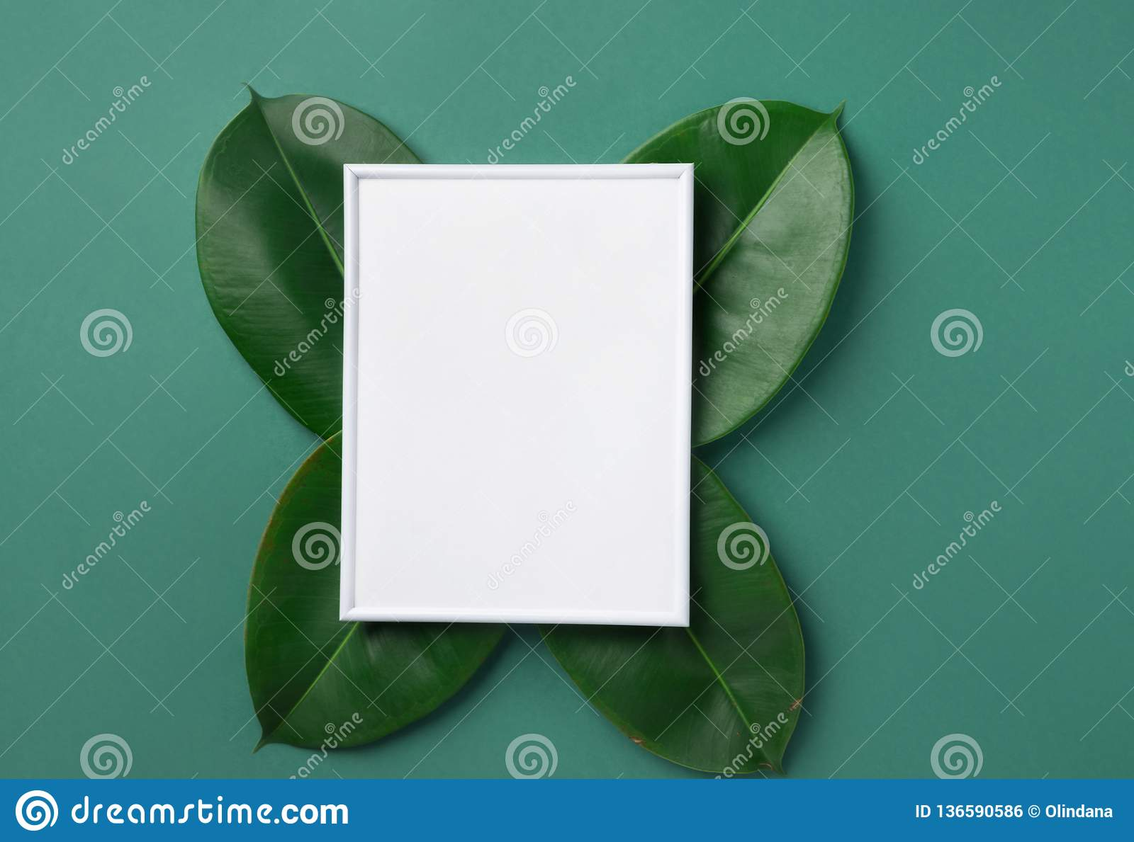 Aquarine Spa White Frame Mockup With Beautiful Big Green Ficus Leaves On