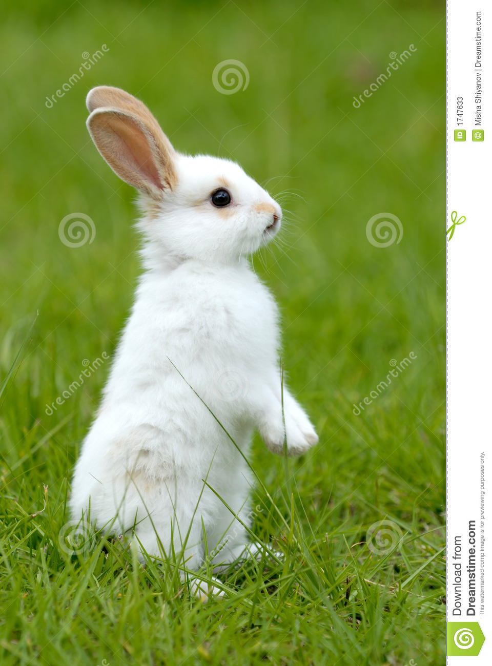 Cute Baby Rabbit Wallpapers White Rabbit On The Grass Stock Image Image Of Green