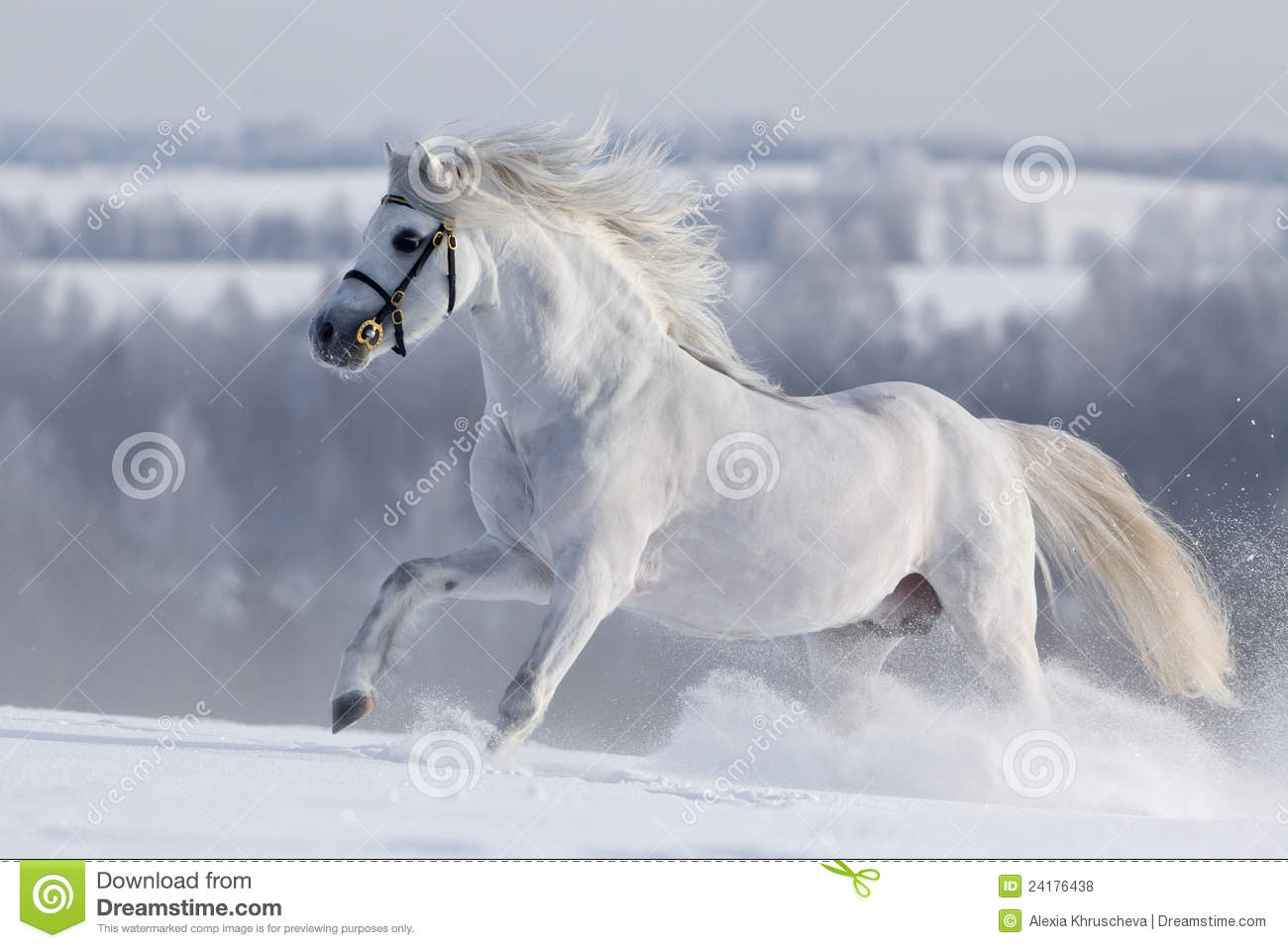 Frei Wild Bettwäsche White Welsh Horse Runns On The Hill Stock Photo Image Of