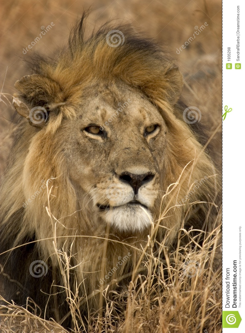 3d Wallpapers Wild Animals Wild Animal In Africa Serengeti National Park Royalty