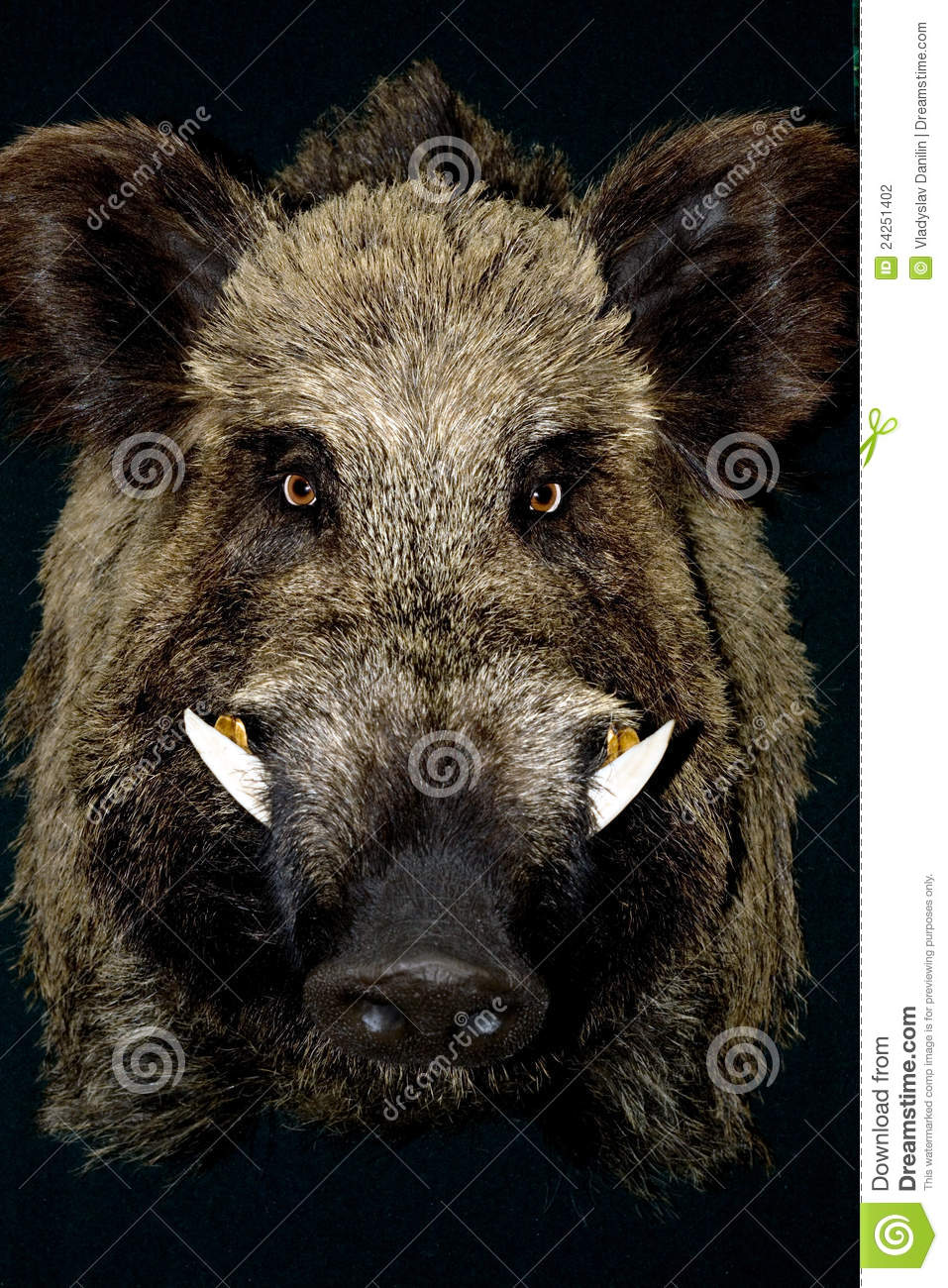 Wild Hog Wild Boar Stock Photo. Image Of Portrait, Bristle, Mammal