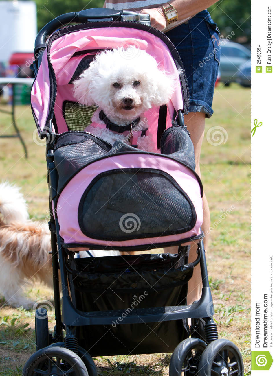 Baby Stroller Clipart Black And White Woman Pushes Poodle In Baby Stroller Editorial Stock Image