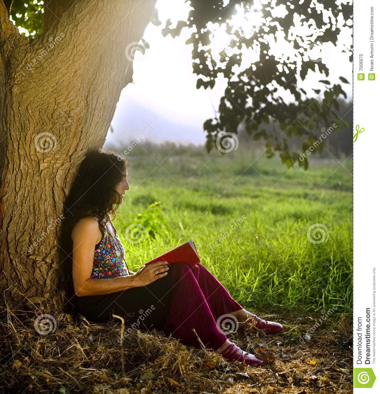 Girl In A Tree Reading A Book Wallpaper Woman Reading Book Under Tree Stock Image Image 7056973
