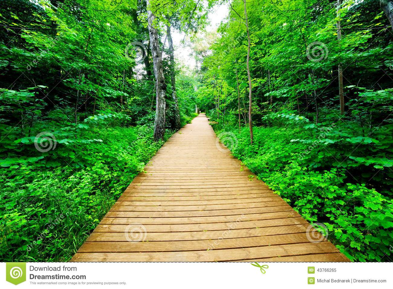 Forest In 3d Landscape Wallpaper Wooden Way In Green Forest Lush Bush Stock Photo Image