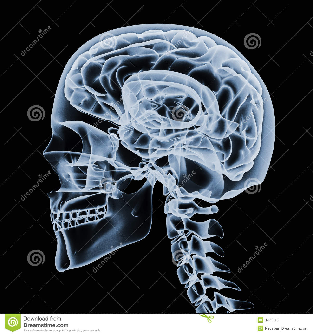 Skeleton Head Wallpaper 3d X Ray Of A Human Head Royalty Free Stock Photo Image