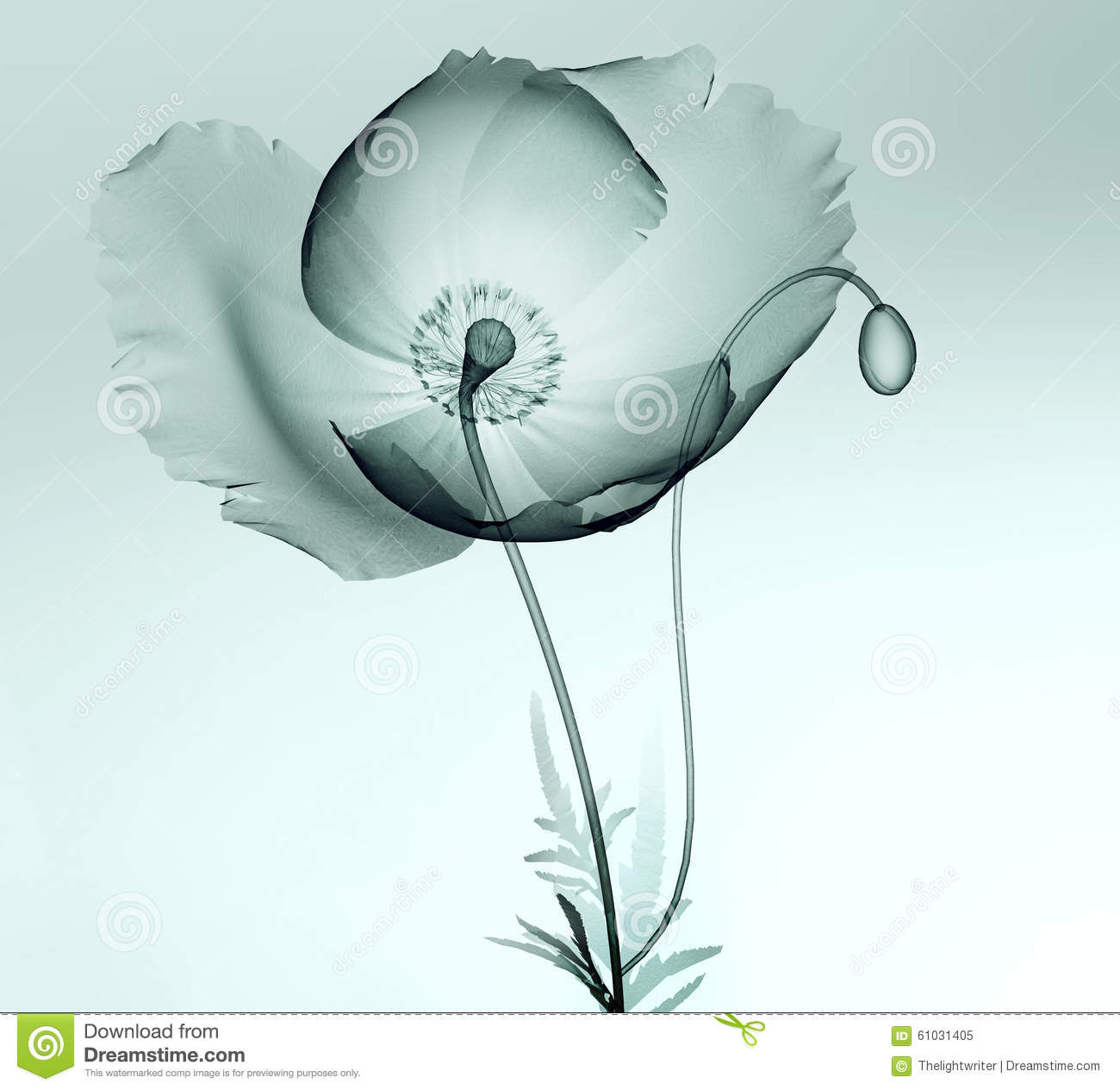 Xray Flower Prints X Ray Image Of A Flower Isolated On White The Poppy