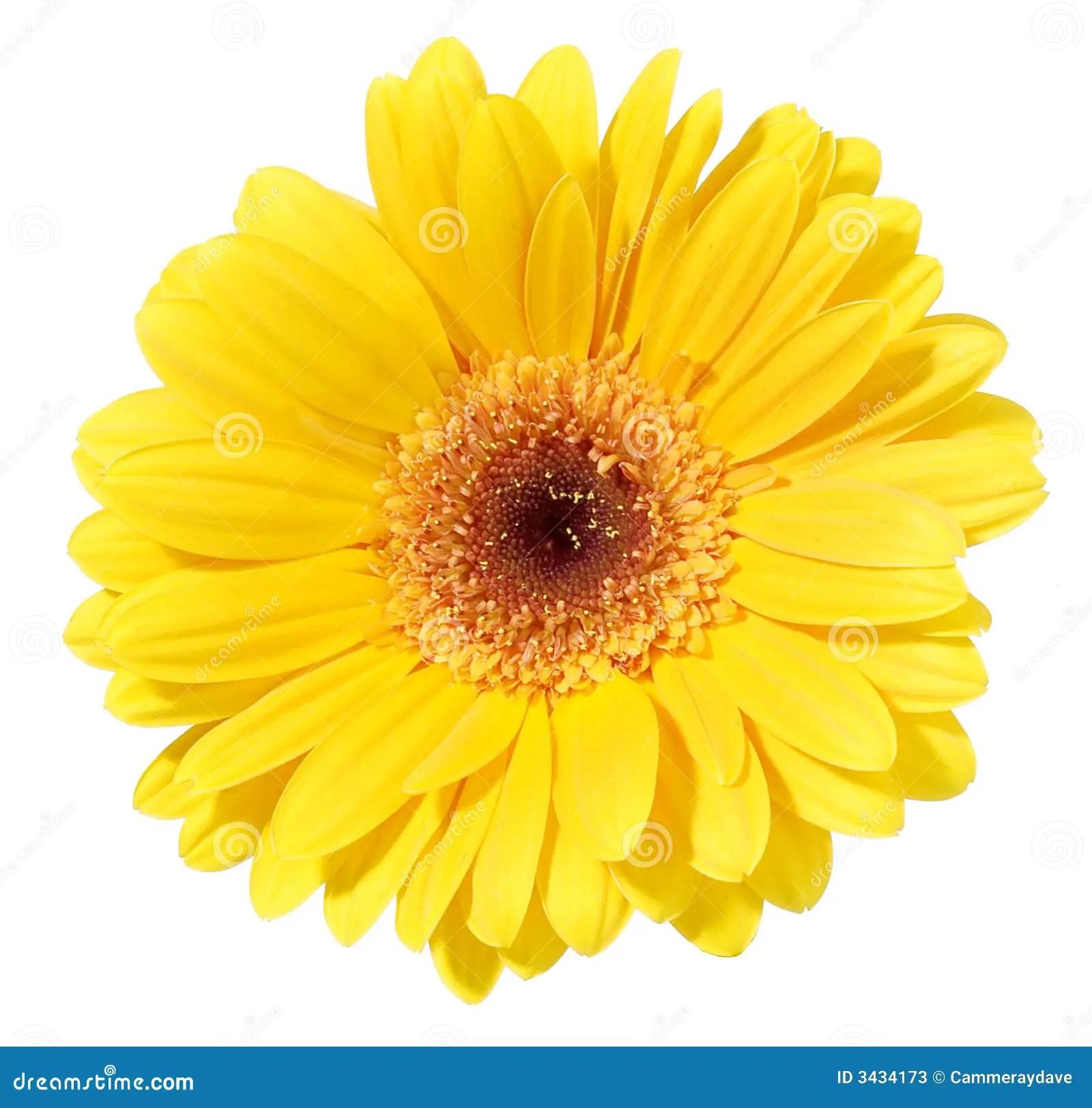 Black Abstract Wallpaper Yellow Gerbera Flower Stock Photos Image 3434173
