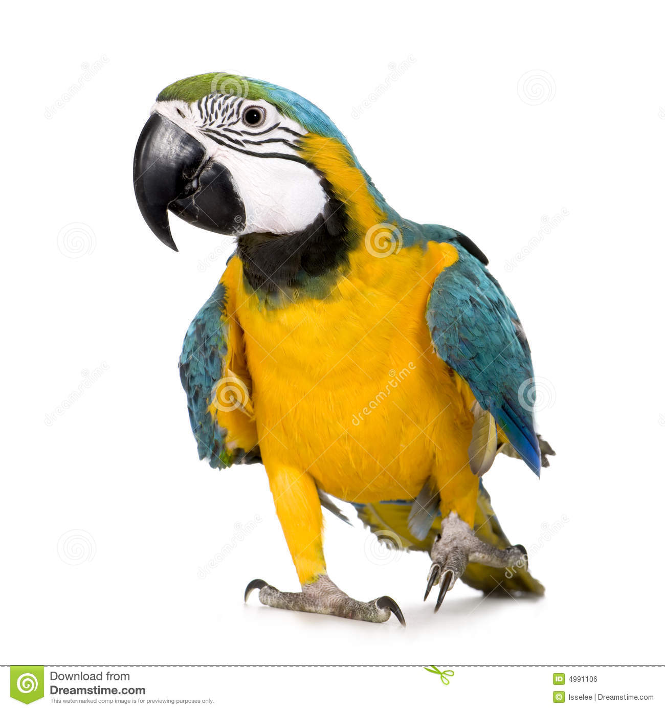 Cute Parakeet Wallpaper Young Blue And Yellow Macaw Stock Photo Image Of