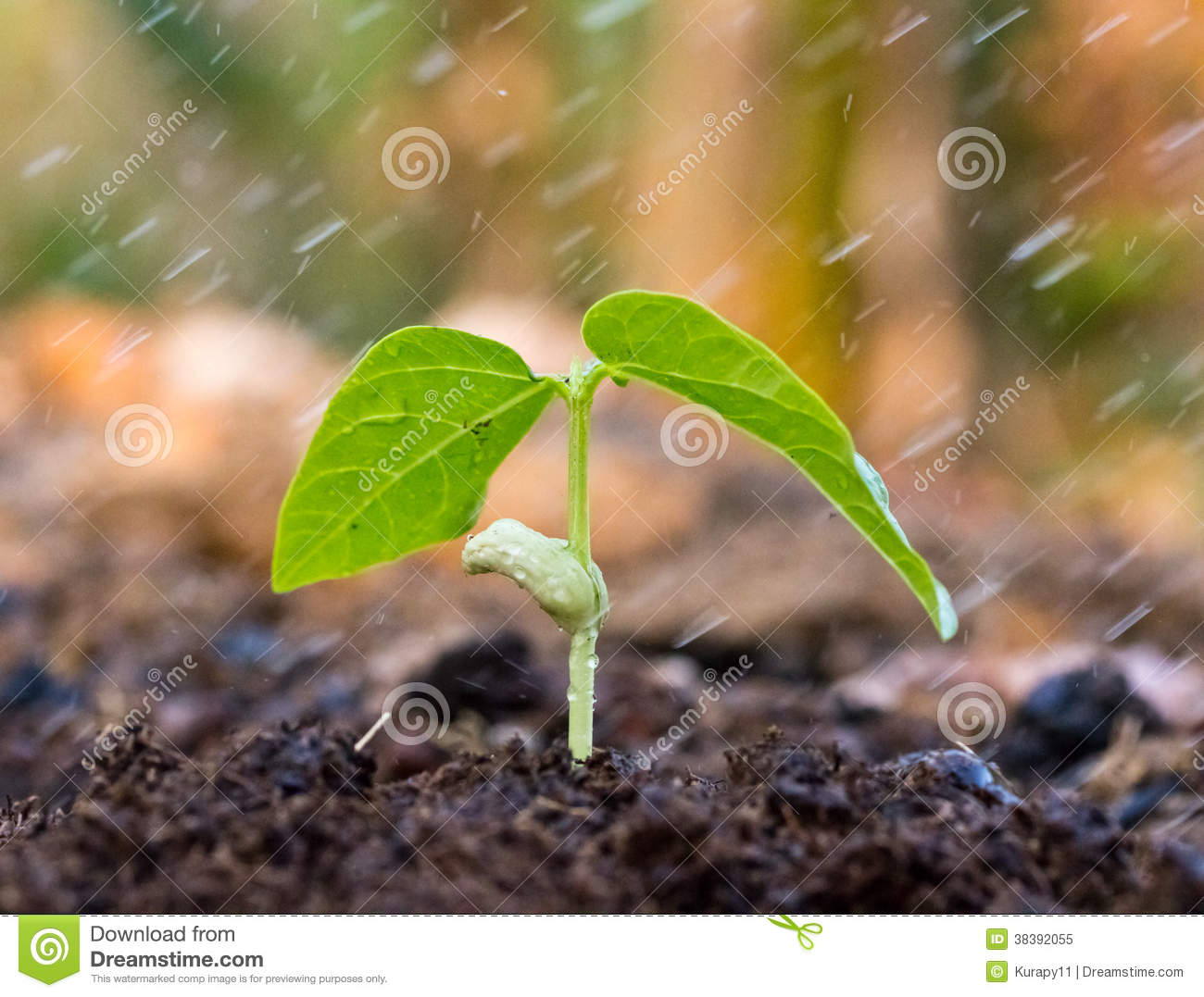 3d Water Drop Wallpaper A Young Green Plant With Rain Royalty Free Stock Photo