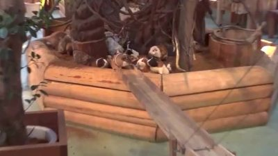 Guinea Pig Bridge at the Nagasaki Bio Park - song by Parry Gripp | Find, Make & Share Gfycat GIFs