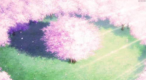Cherry Blossom animated GIF GIF Find, Make  Share Gfycat GIFs