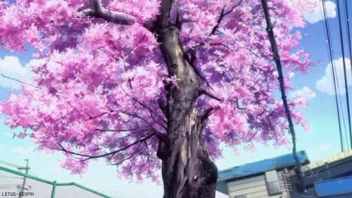 Animated Gif CHERRY BLOOSM cherry blossoms sakura tree