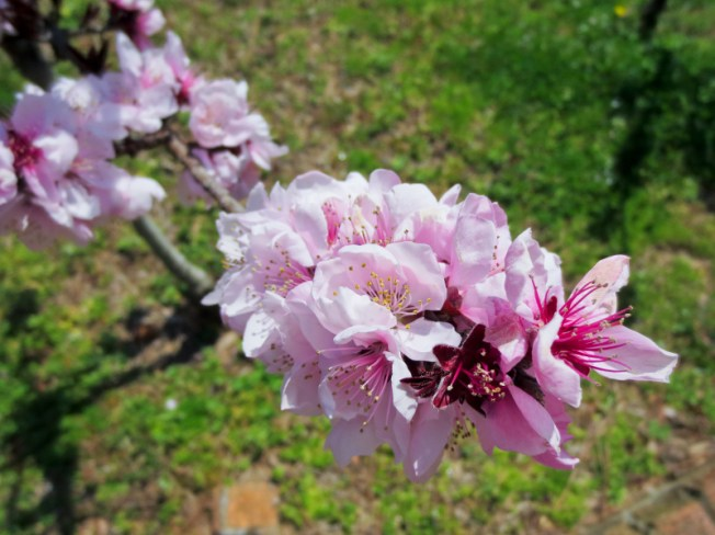 Spring florals-1a