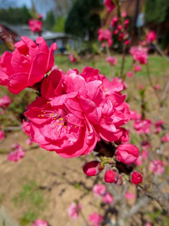 Spring florals-2a