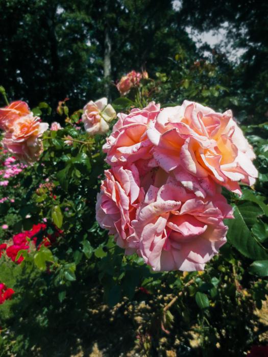 Fernbank-Rose-Staton-Garden-6b