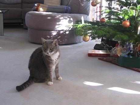 Katze Peggy