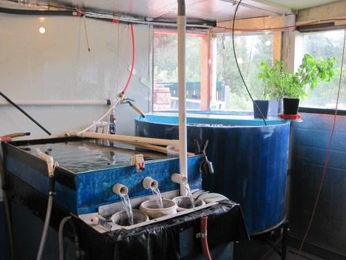 Medium Of 200 Gallon Aquarium
