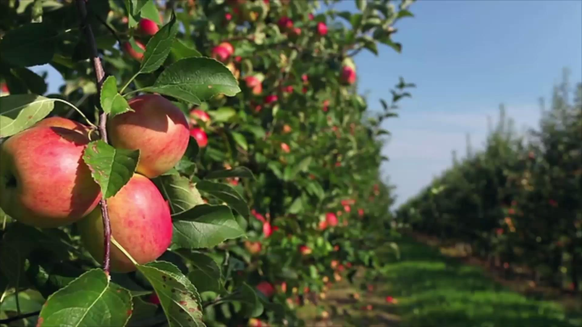 Panoramic Wallpaper Fall The South S Best Apple Orchards Southern Living