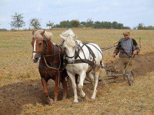 800px-Farmer_plowing