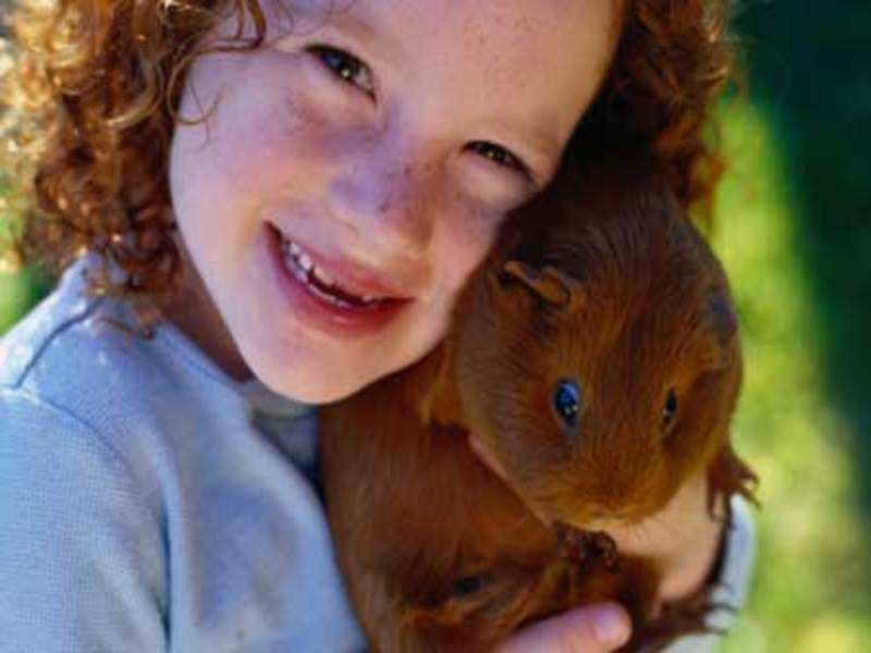How to Take Care of Pet Guinea Pig