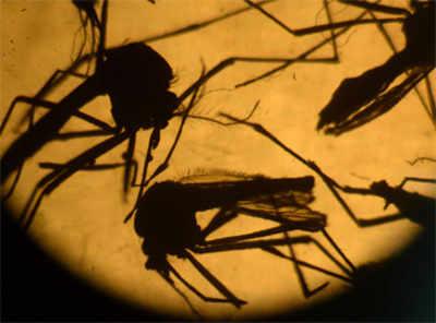 Maharashtra villages can show world how to beat Zika