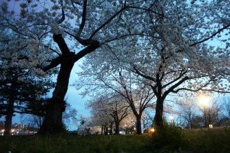 Blossoms @ DC