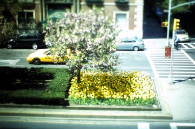 Blossoms + Tulips @ Upper East Side
