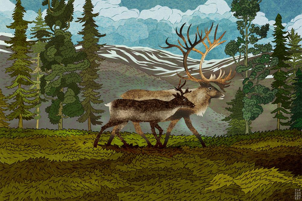 Beautiful Wild Animals Wallpapers Species At Risk In Canada L David Suzuki Foundation Series