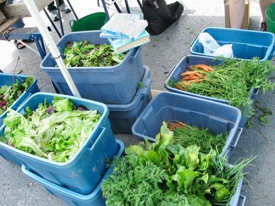 Harvest bins