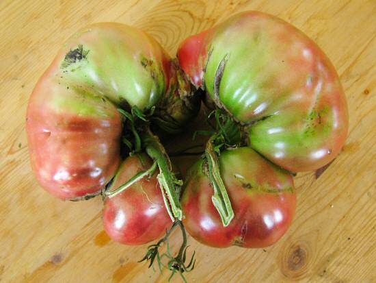 Black Seaman tomato