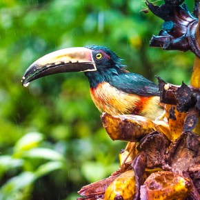 3 Reasons You Should Visit Costa Rica for the Birds