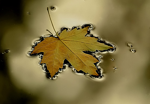 National Geographic Fall Wallpaper Benefits Of Macro Photography In Nature Mike Moats