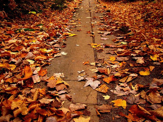 Cozy Fall Hd Wallpaper Fallen Leaves Network