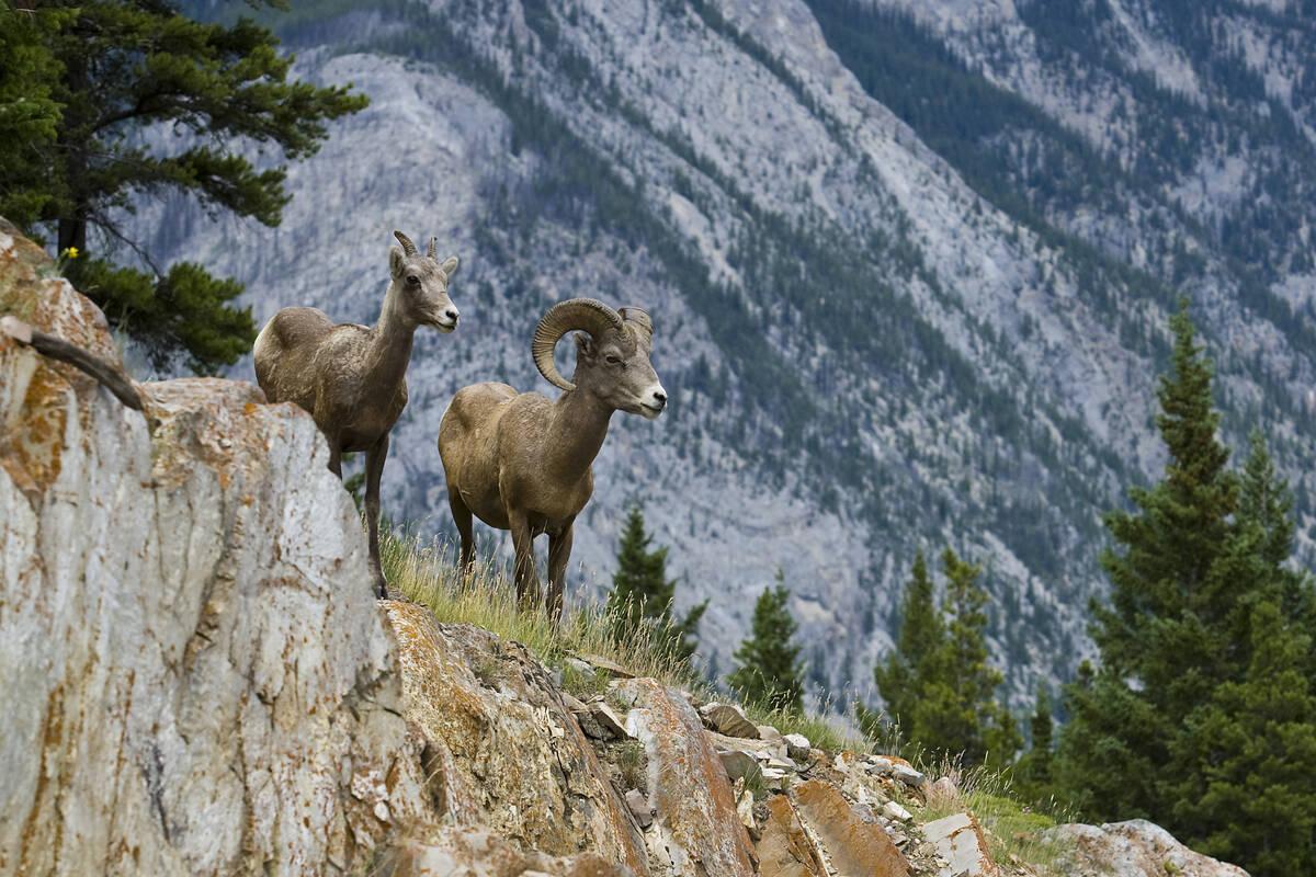 banff national park bezienswaardigheden
