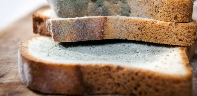 Moldy Bread Edited