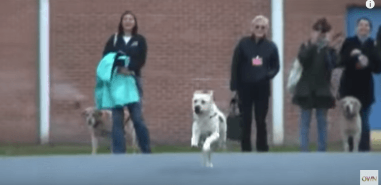 Veteran service dog is reunited with his owner
