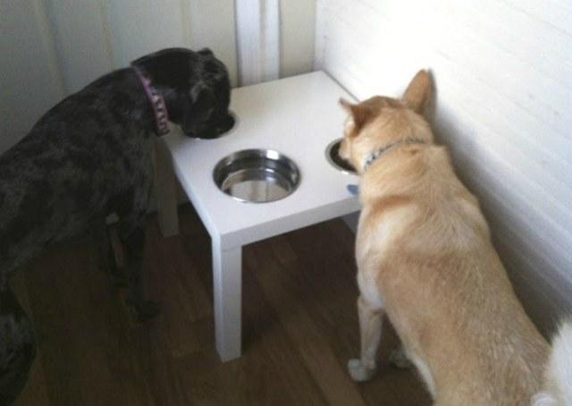 Doggy Dish Coffee Table