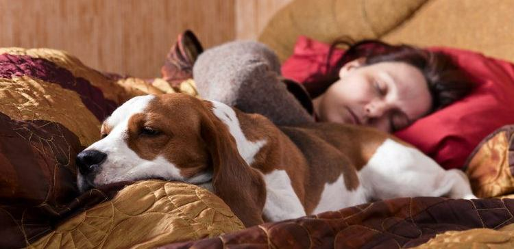 Woman sleeping with her dog on the bed.
