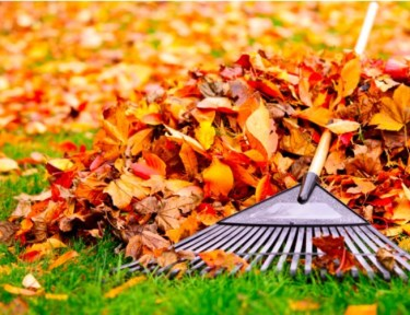 colorful leaves being raked