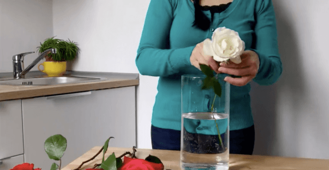 woman placing a flower into a vase